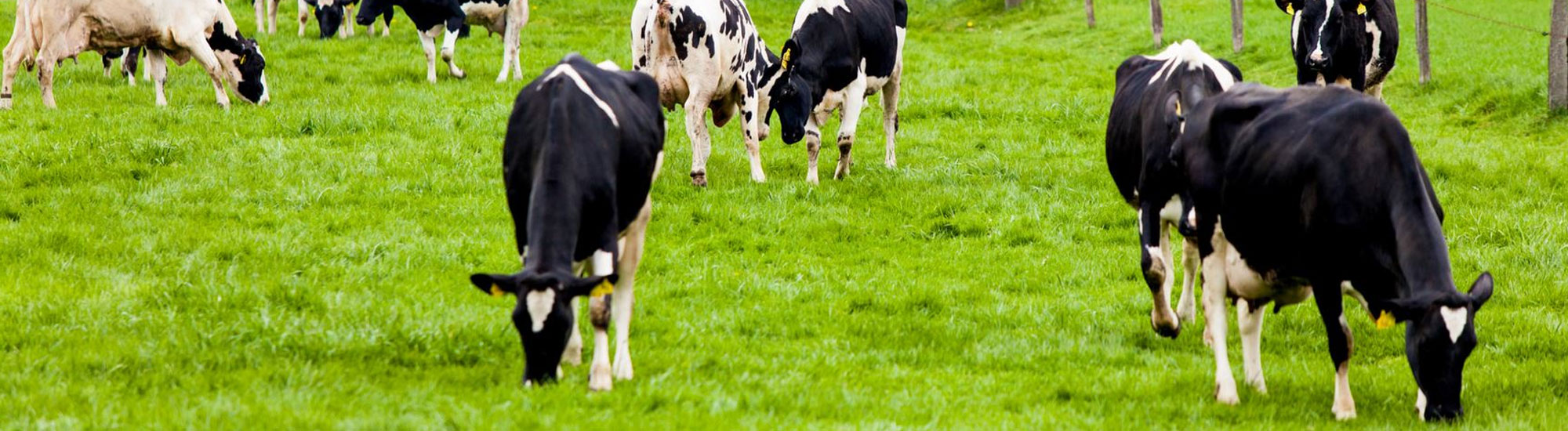 Dairy 4 Future